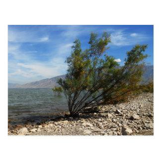 Willard Bay, Utah Postcard