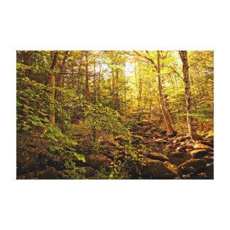 Willard Brook in Fall Canvas Print
