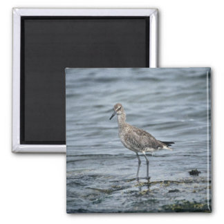 Willet Magnet