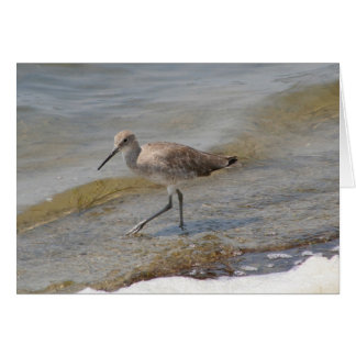 Willet Walking Card