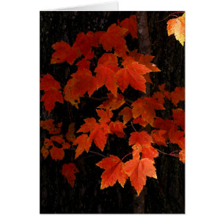 William O'Brien maple leaves Card