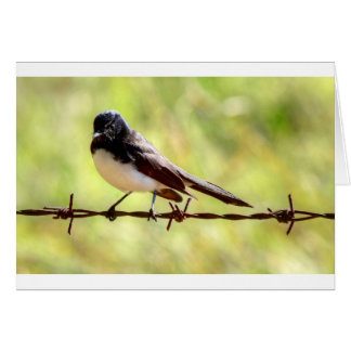 WILLIE WAGTAIL IN RURAL QUEENSLAND AUSTRALIA GREETING CARD