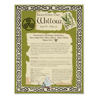 WILLOW CELTIC SACRED TREE POSTER