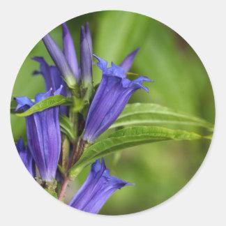 Willow gentian (Gentiana asclepiadea) Classic Round Sticker