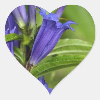Willow gentian (Gentiana asclepiadea) Heart Sticker