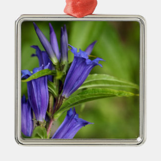 Willow gentian (Gentiana asclepiadea) Silver-Colored Square Decoration