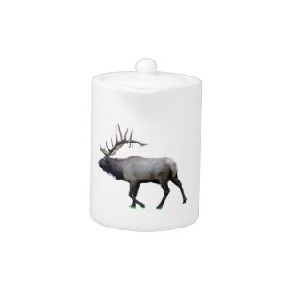 Willow Wapiti elk
