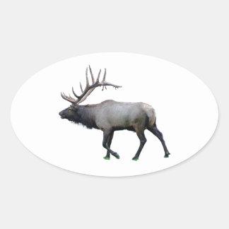 Willow Wapiti elk Oval Sticker