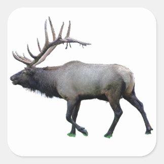 Willow Wapiti elk Square Sticker