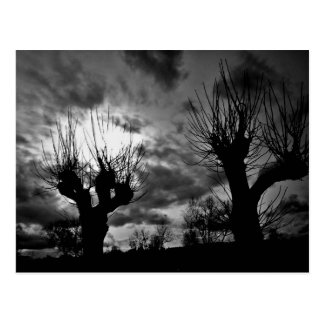 Willows in black and white postcard