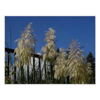 Willowy weeds on an autumn day posters