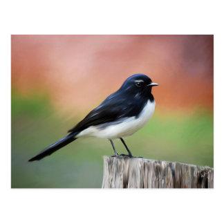 Willy Wagtail - Australian Bird Art Postcard