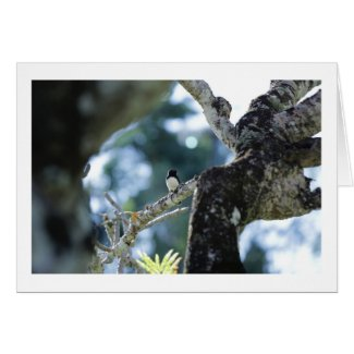 Willy Wagtail in Tree Card