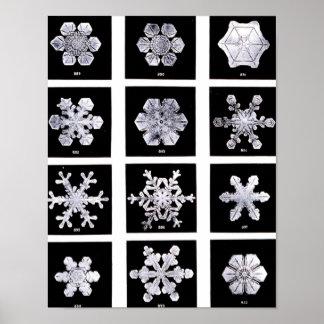 Wilson Bentley Snowflakes Print