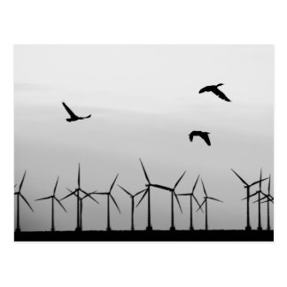 Wind farm and birds postcard