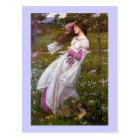 Wind Flowers in the Meadow Postcard
