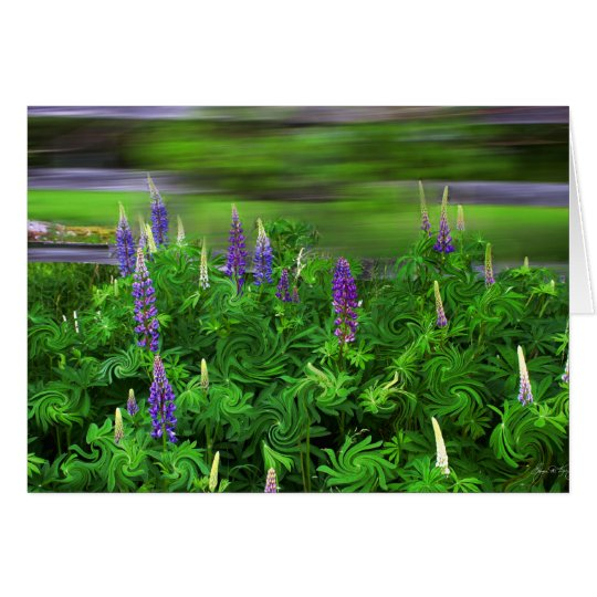 Wind in the Lupines Card