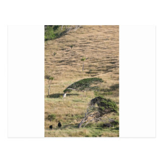 Wind tortured trees rural New Zealand Postcard