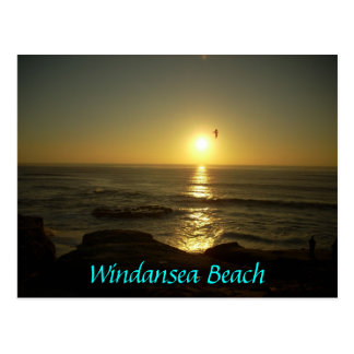 Windansea Beach Postcard