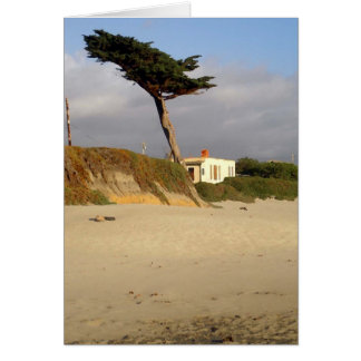 Windblown Cypress and House Card