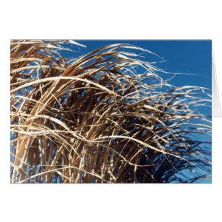 Windblown Grass Card