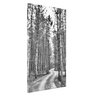 Winding Path Stretched Canvas Print