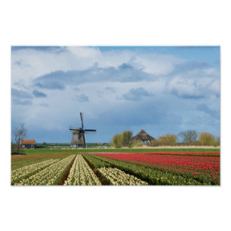 Windmill and tulips landscape poster print
