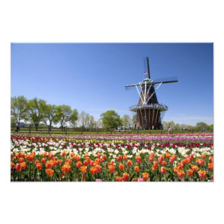Windmill Island park with tulips in bloom at Photo Print