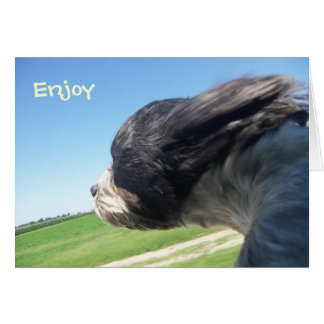 Windswept dog birthday card