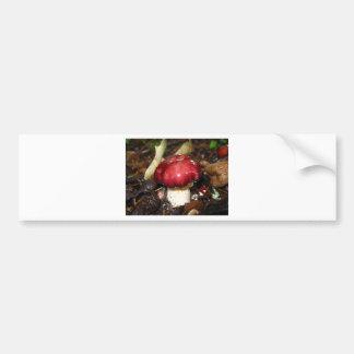 Wine Cap Mushroom Bumper Stickers
