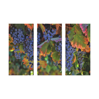 Wine Country Art Triptych 3 Panel Canvas Vineyard
