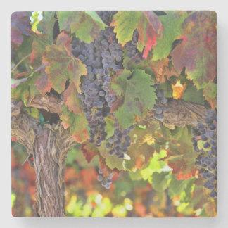 Wine Country Vineyard Coasters
