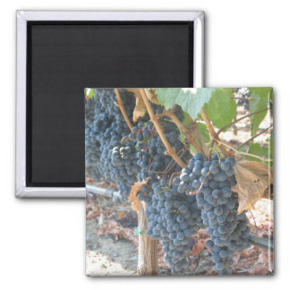 wine grapes square magnet