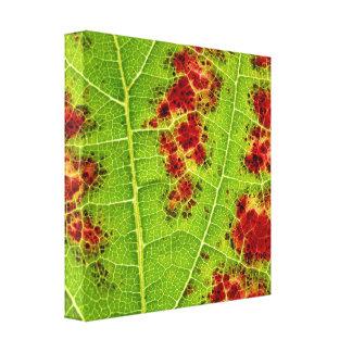 Wine leaf II Canvas Print