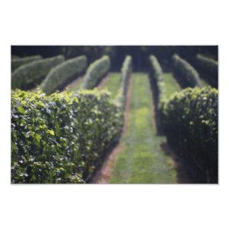 Wine Lines Photo Print
