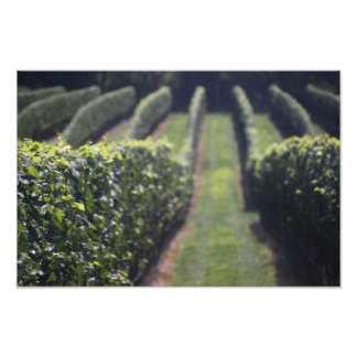 Wine Lines! Photograph