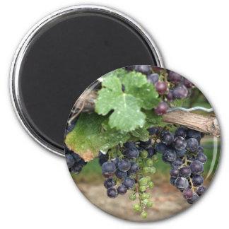 Wine on the Vine 6 Cm Round Magnet
