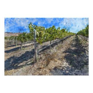 Wine Vineyard in Napa Valley Photograph