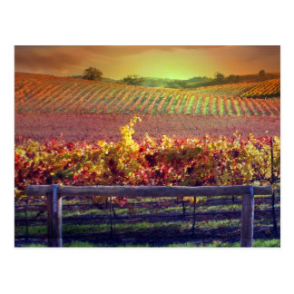 Wine Vineyard Postcard