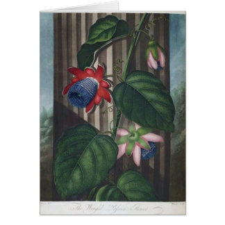 Winged Passion Flower Card