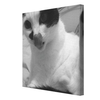 Winnie Cat Canvas Print