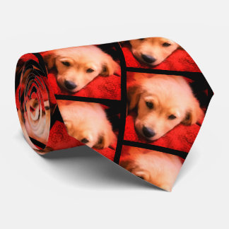 Winston the Golden, Holiday Tie