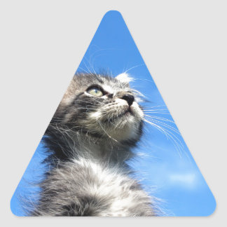 Winston the Tabby Aviator Cat Triangle Sticker