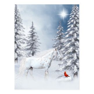 Winter appaloosa postcard