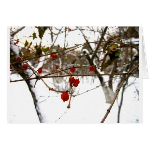 Winter Berries Card