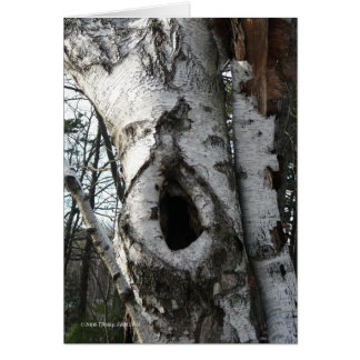 Winter Birch Trees Greeting Card