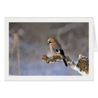 Winter Bird Greeting Card