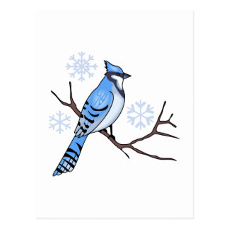 WINTER BLUE JAY POSTCARD