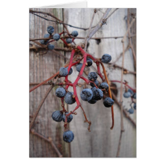 winter blueberries card