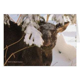 Winter Browse Moose Greeting Card
